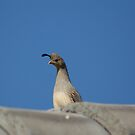 QUAIL MOM ON THE ROOF by Bonnie Pelton