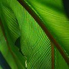 Green Light by Catherine Davis