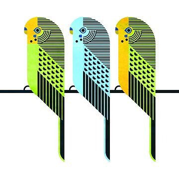 Budgerigars by scottpartridge