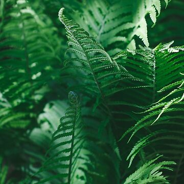 Macro photography of a fern in a tropical forest. Nature background. by Edalin