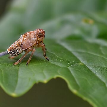 Very Small Bug by relayer51
