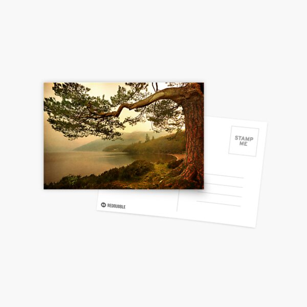 The Branch (Textured) Postcard