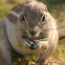 Mmmm....grass by ChrisCoombes