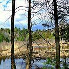 The Wilderness ! by Elfriede Fulda