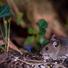 Timmy Mouse by Matt Sillence