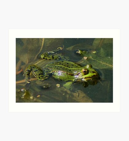 Four Eyed frog Art Print