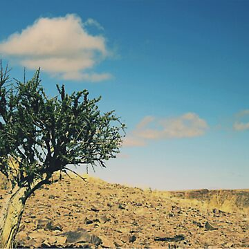 Acacia Tree, Namibia by MacLeod