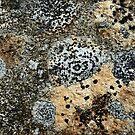 Lichen by dOlier