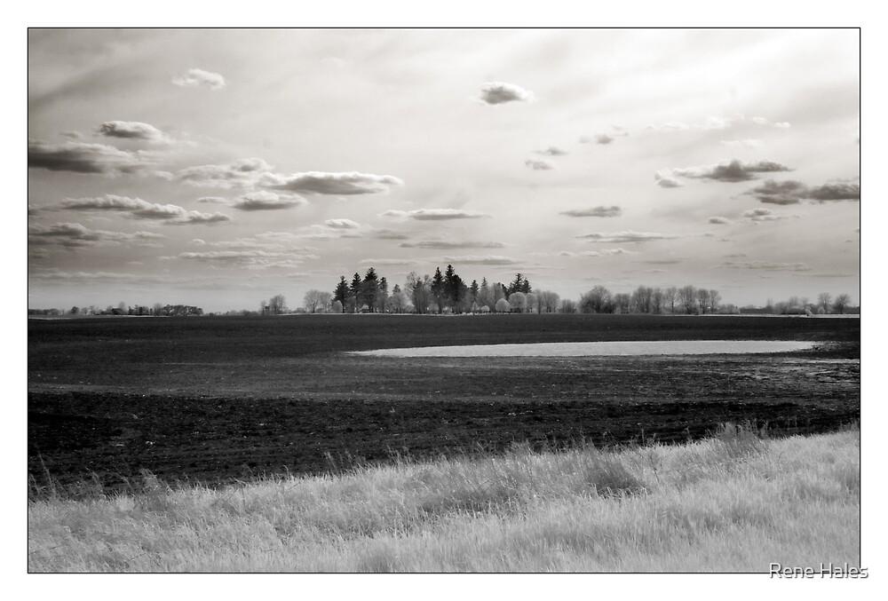 Farmland - Oswego, IL USA  by Rene Hales
