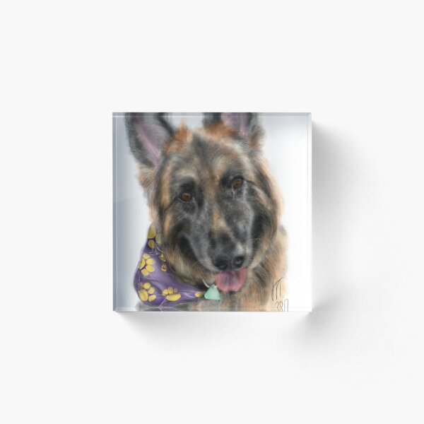 Smiling German Shepherd Dog With Bandanna  Acrylic Block