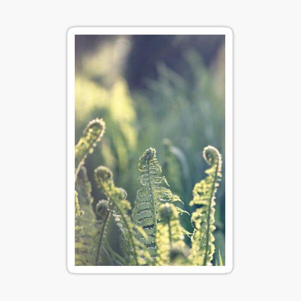 Polypodium vulgare fern close up Sticker