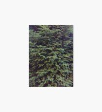 Pine Tree Art Board