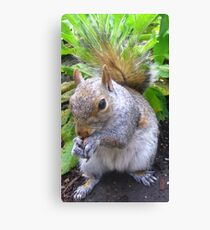 Nutty Squirrel Canvas Print