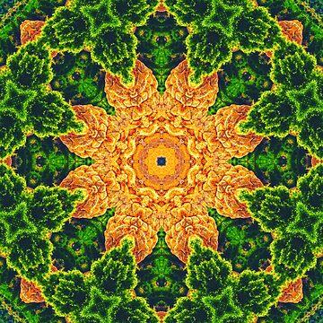 Desert Majestics Mandala by wildmirror