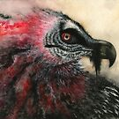 Fleeting: Iron Oxide (Bearded Vulture) by NoelleMBrooks