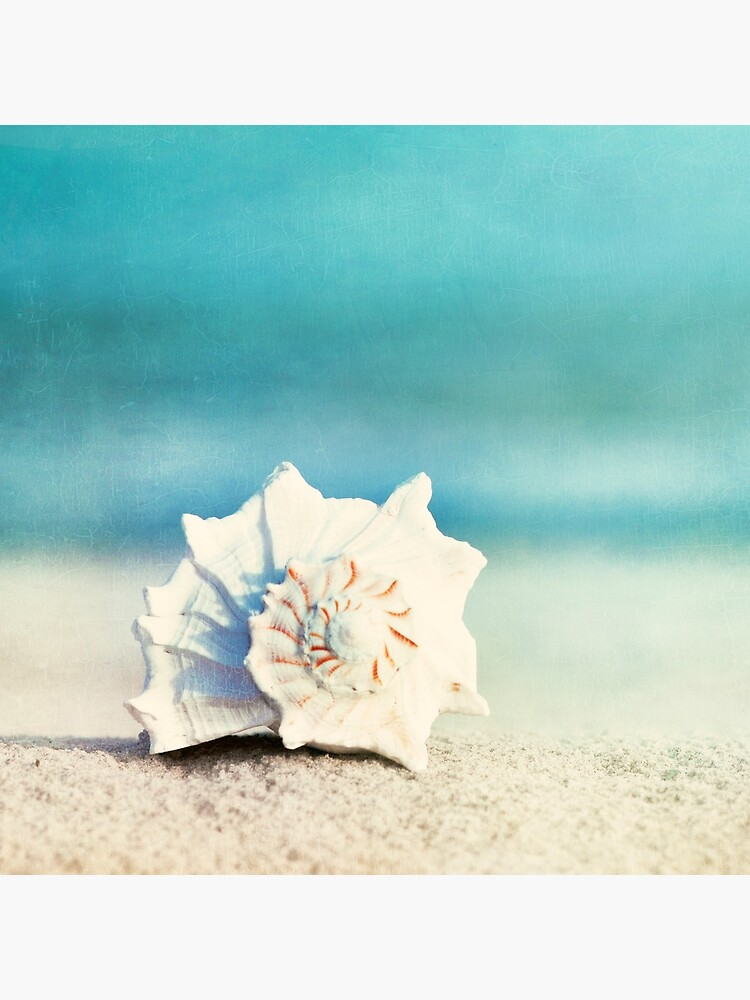"""""""Paradise"""" - Aqua Beach Seashell  by CarolynJC"""