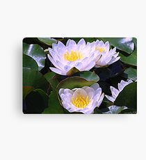 White Water Lilies Canvas Print