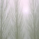 Winter Poplars in Fog 1 by SteveOhlsen