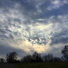 Levee Sky by Barbara Wyeth