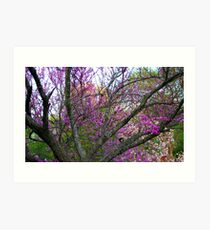Trees in bloom Art Print