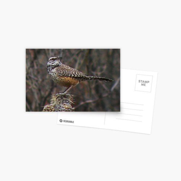 Cactus Wren on Cactus Postcard