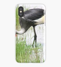 Grey Crowned Crane (Balearica regulorum) with chick.  iPhone Case
