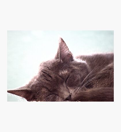 Sleeping Kitty Photographic Print