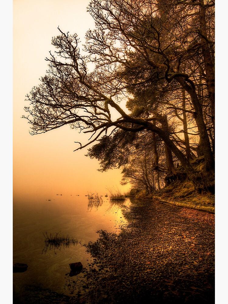 Shoreline by Shuggie
