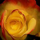 rose  by Rene