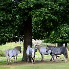 Horses sheltering by iOpeners