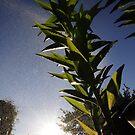 Sprinkle The Plant by Mark Hayward