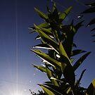 Sunny Plant by Mark Hayward