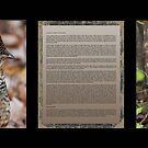 Innocence  (Gray Morph Ruffed Grouse) by DigitallyStill