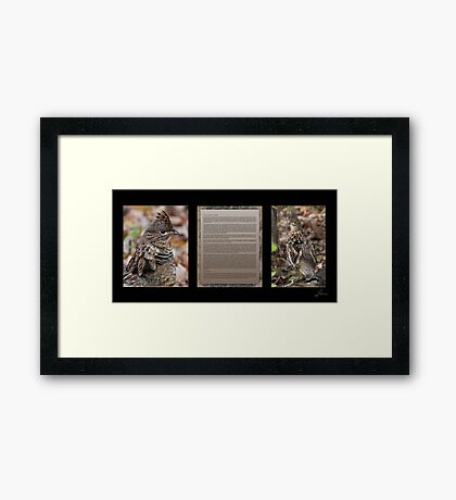 Innocence  (Gray Morph Ruffed Grouse) Framed Print