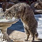 Cat Drink by Kimberly Palmer