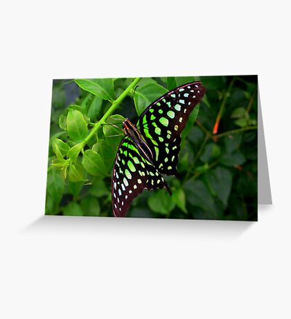 Butterfly in green Greeting Card