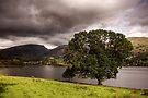 Grassmere by SteveMG