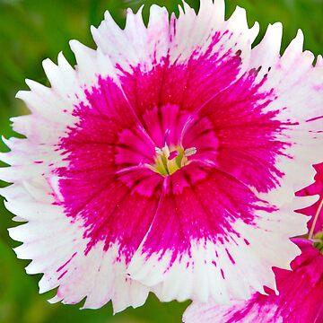 Garden Flora by Femaleform