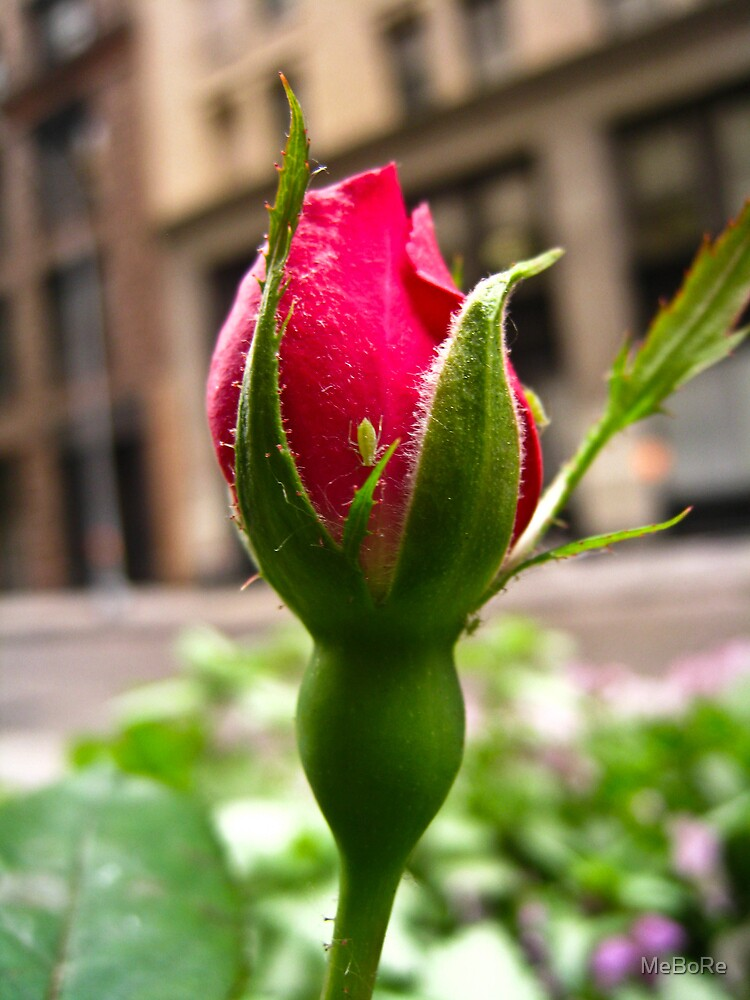Bud in the City by MeBoRe