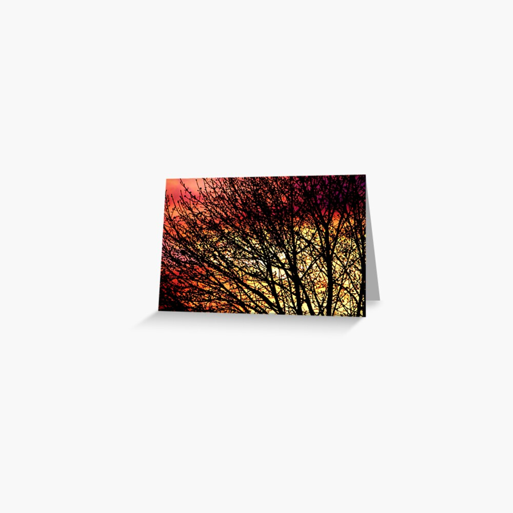 Evening Light in Rose and Gold Greeting Card
