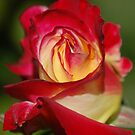 In the Bud by duckie