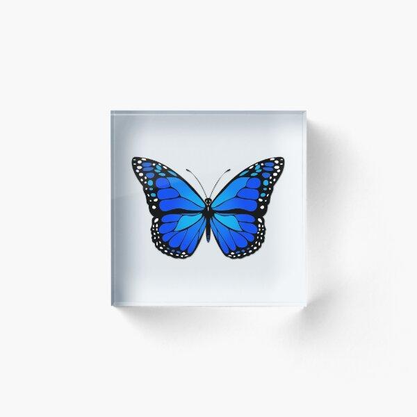 Blue butterfly Acrylic Block