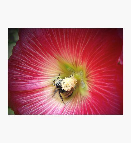 Pollenated! Photographic Print