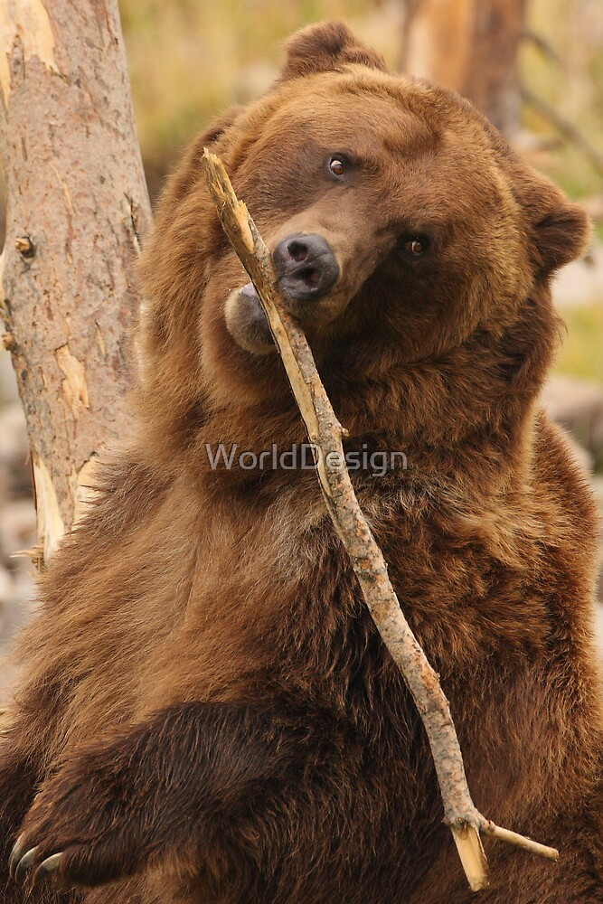 Grizzly Bear Cute by WorldDesign
