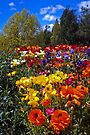 Spring Colour, Hobart Style by BRogers