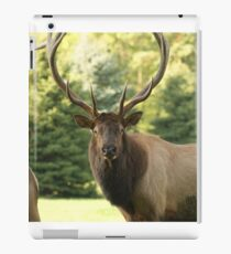 Big Bull Elk iPad Case/Skin