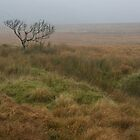 Lone tree on misty Dartmoor by peteton