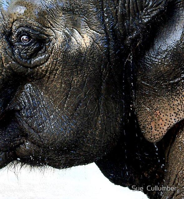 Exuberant Elephant by Sue  Cullumber