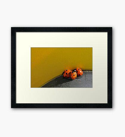 Ladybird Huddle Framed Print