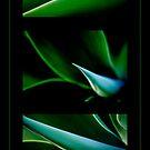 Agave Triptic.. by Janine  Hewlett